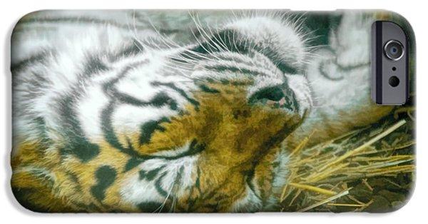 Chicago Cubs iPhone Cases - Sleeping Tiger iPhone Case by LeeAnn McLaneGoetz McLaneGoetzStudioLLCcom