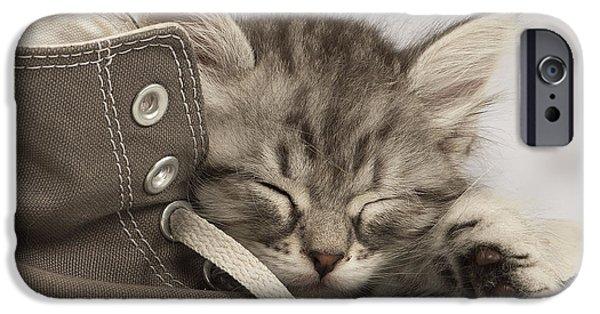 Innocence iPhone Cases - Sleepy Siberian Kitten iPhone Case by Jean-Michel Labat