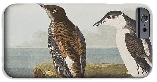 Sea Birds Drawings iPhone Cases - Slender-billed Guillemot iPhone Case by John James Audubon
