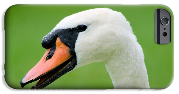 Swans... iPhone Cases - Sly Smile iPhone Case by Duane Lipham