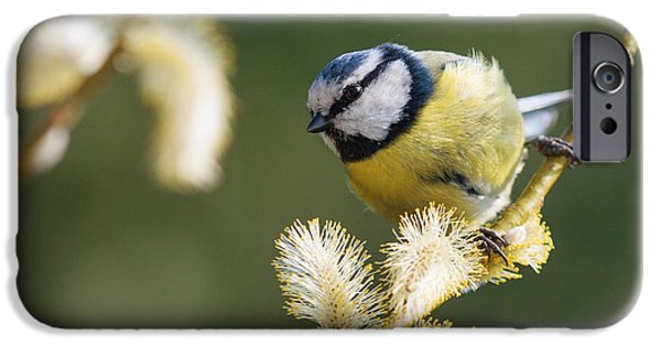 Matting iPhone Cases - The blue tit iPhone Case by Katey jane Andrews