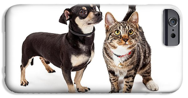 Friendly iPhone Cases - Small Dog and Cat Looking Up Together iPhone Case by Susan  Schmitz