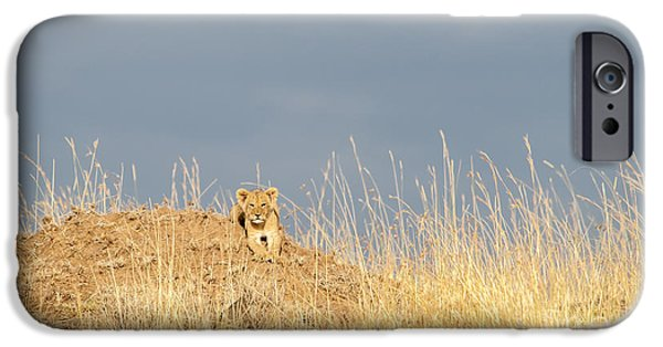 Recently Sold -  - Innocence iPhone Cases - Small Lion in a Big World iPhone Case by Paulette Sinclair