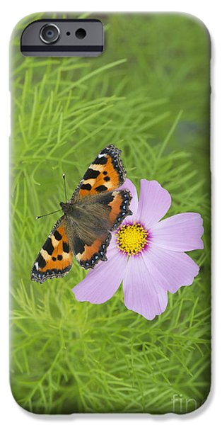 Fauna iPhone Cases - Small Tortoiseshell  iPhone Case by Tim Gainey