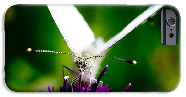 Nature Scene iPhone Cases - Small  White Cabbage Butterfly Pieris rapae iPhone Case by Chris Smith