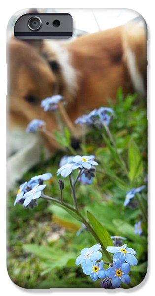 Cute Puppy iPhone Cases - Smell The Flowers iPhone Case by Lisa and Caitlyn