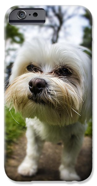 Dog Photography iPhone Cases - Smile for the Camera iPhone Case by Martin Newman