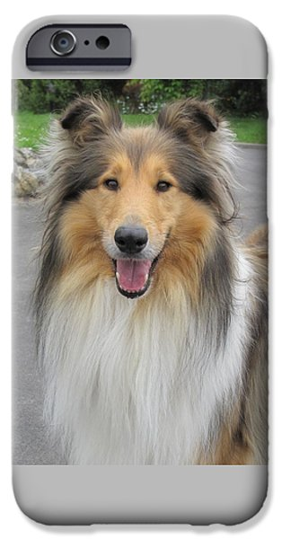 Dogs iPhone Cases - Smiling Collie iPhone Case by Karen Wood