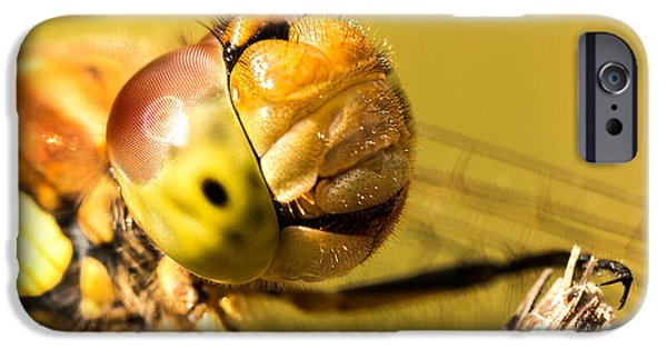 Dragonfly iPhone Cases - Smiling Dragonfly iPhone Case by Ian Hufton
