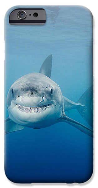 Smiling Great White Shark iPhone Case by Dave Fleetham - Printscapes