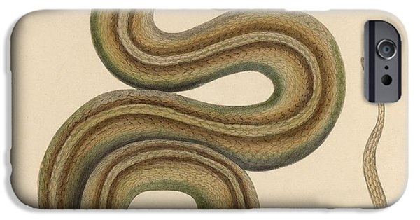 Zoology Paintings iPhone Cases - Snake iPhone Case by MotionAge Designs