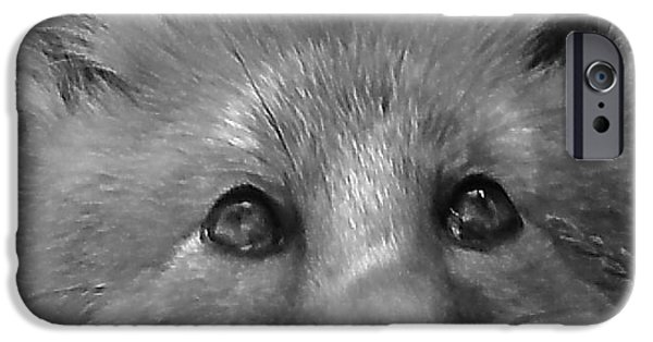 Dogs iPhone Cases - Snarling Fox iPhone Case by Jeff Townsend