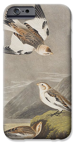 Flight Drawings iPhone Cases - Snow Bunting iPhone Case by John James Audubon