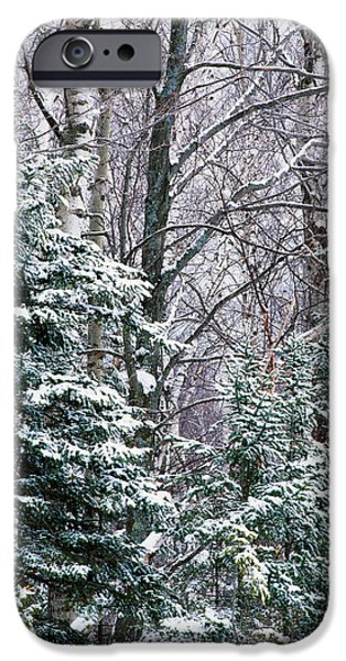 Snowy Day iPhone Cases - Snow-covered Forest, Wisconsin, Usa iPhone Case by Panoramic Images