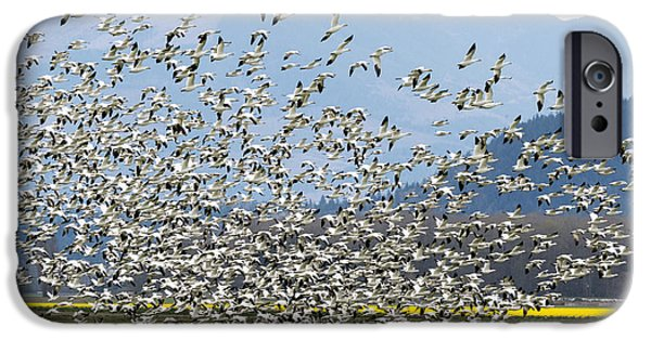 Snow iPhone Cases - Snow Geese Exodus iPhone Case by Mike Dawson