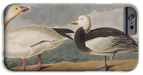 Snow iPhone Cases - Snow Goose iPhone Case by John James Audubon