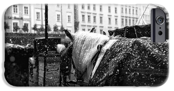 The Horse Photographs iPhone Cases - Snow on His Mane iPhone Case by John Rizzuto