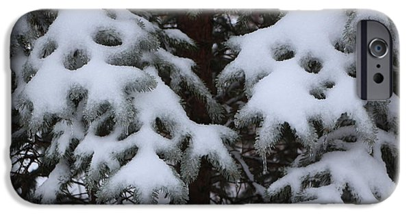 Pines iPhone Cases - Snow Smiles in the Pines iPhone Case by Jari Hawk