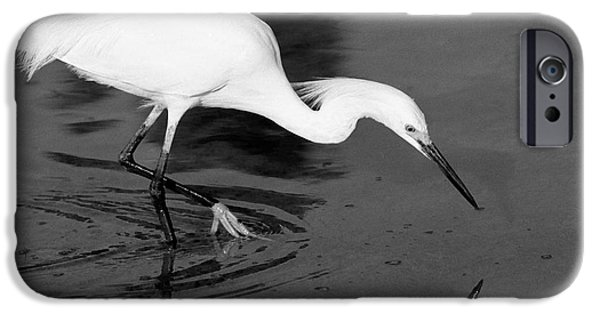 Snowy iPhone Cases - Snowy Egret Fishing iPhone Case by John Harmon