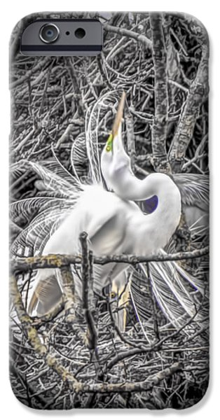 Snowy Day iPhone Cases - Snowy Egret Heron iPhone Case by LeeAnn McLaneGoetz McLaneGoetzStudioLLCcom