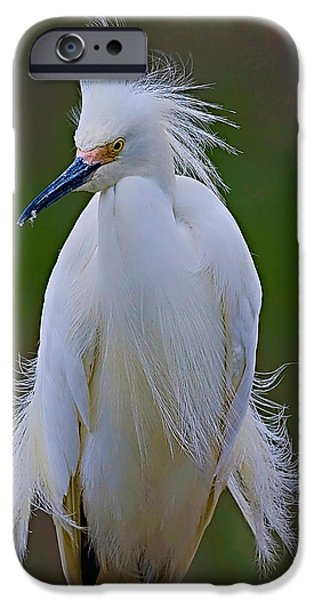 Snowy Egret iPhone Cases - Snowy Egret Struts iPhone Case by William Jobes