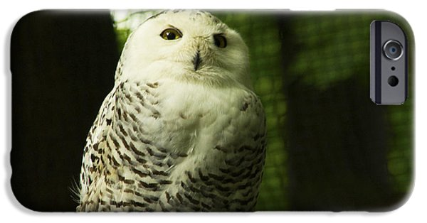 Recently Sold -  - Snowy iPhone Cases - Snowy Owl iPhone Case by Andrew Bloom