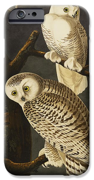 Snowy Night iPhone Cases - Snowy Owl iPhone Case by John James Audubon