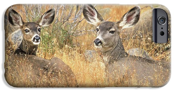 Wild Animals iPhone Cases - So Much For Your Secret Place... iPhone Case by Donna Kennedy