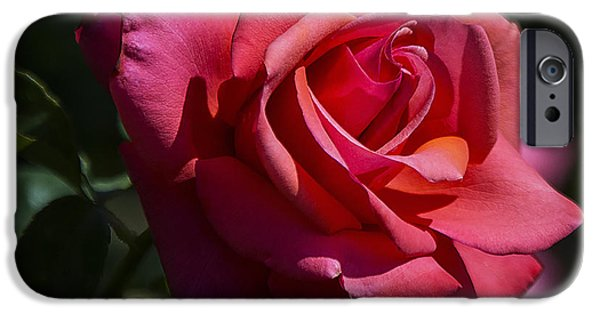 Floral Photographs iPhone Cases - So Red the Rose  iPhone Case by Saija  Lehtonen
