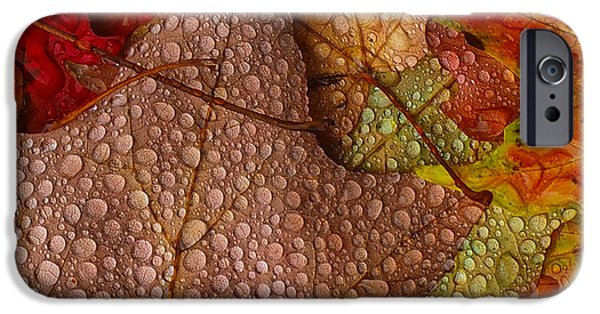 Autumn iPhone Cases - Soaked Autumn leaves... iPhone Case by Andy  Cohen