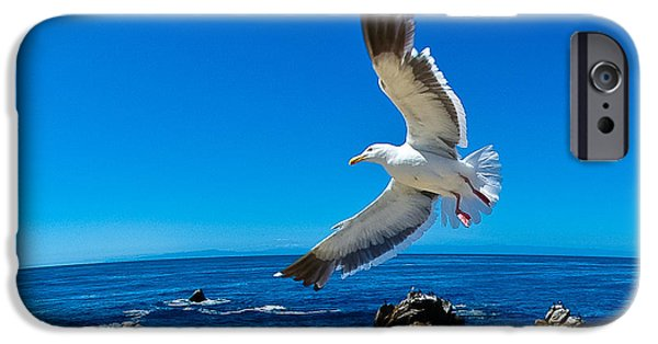 Flying Seagull iPhone Cases - Soaring Bird iPhone Case by Harry Spitz
