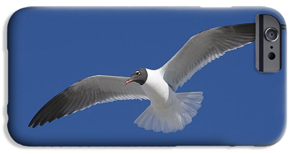 Flying Seagull iPhone Cases - Soaring Gull iPhone Case by Clarence Holmes
