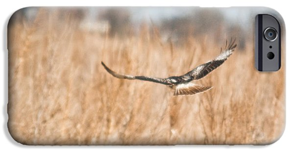 Preditor iPhone Cases - Soaring Hawk Over Field iPhone Case by Douglas Barnett