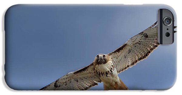 Redtail Hawk iPhone Cases - Soaring Red Tail Square iPhone Case by Bill  Wakeley