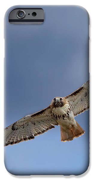 Soaring Red Tail Square iPhone Case by Bill  Wakeley