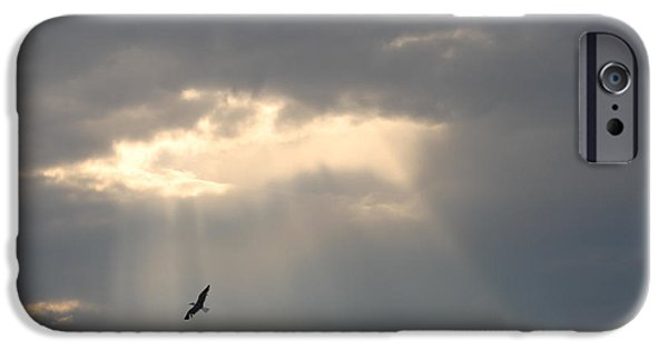 Flying Seagull iPhone Cases - Soaring Through The Sunshine iPhone Case by Robert Banach