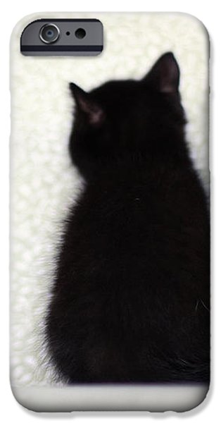 Photos Of Cats iPhone Cases - Sitting Kitty iPhone Case by Amy Tyler