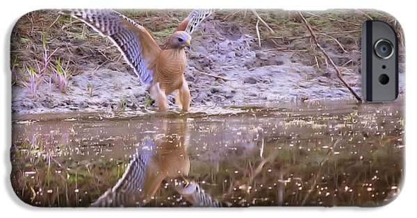 Hawk iPhone Cases - Soft Landing on the Pond iPhone Case by Carol Groenen