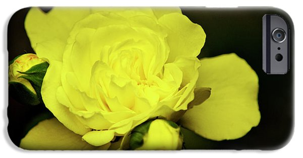 Floral Photographs iPhone Cases - Soft Yellow Rose iPhone Case by Christina Rollo