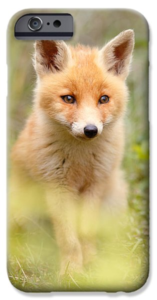 Juveniles iPhone Cases - SoftFox iPhone Case by Roeselien Raimond