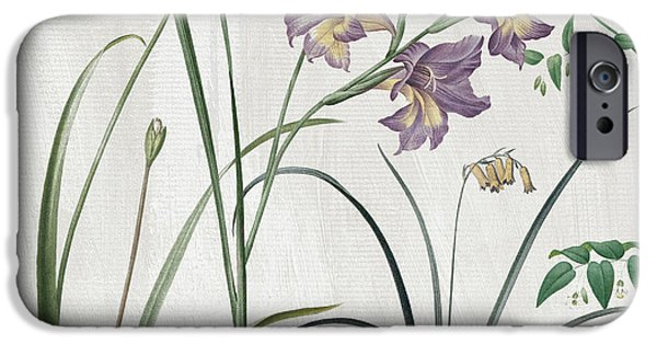 Alliums iPhone Cases - Softly Purple Crocus iPhone Case by Mindy Sommers