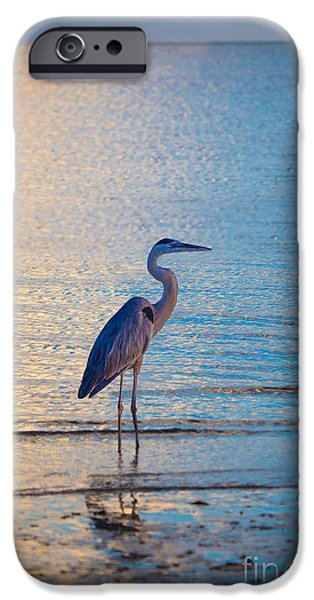 Flying Seagull iPhone Cases - Solitary Bird by Darrell Hutto iPhone Case by Darrell Hutto