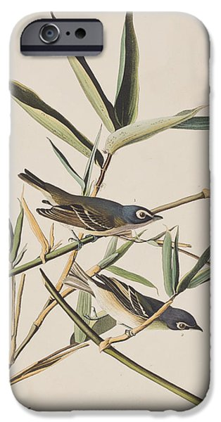 Solitary iPhone Cases - Solitary Flycatcher or Vireo iPhone Case by John James Audubon