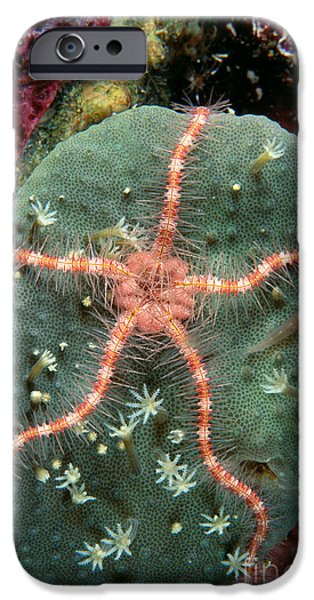Serpent iPhone Cases - Soloman Islands, Marine Life iPhone Case by Ed Robinson - Printscapes