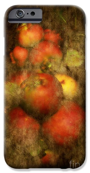 Crops iPhone Cases - Somerset Apples iPhone Case by Alexandra Lavizzari