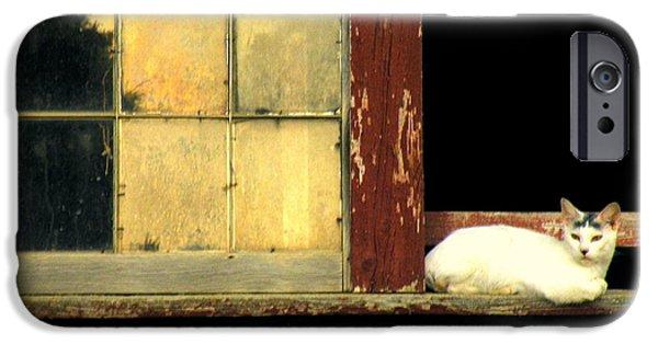 Ledge iPhone Cases - Somethings Stirring iPhone Case by Joe Jake Pratt