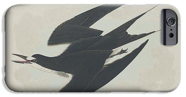 Tern iPhone Cases - Sooty Tern iPhone Case by John James Audubon