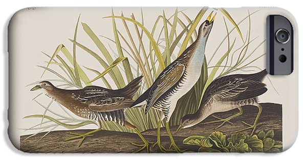 Audubon iPhone Cases - Sora or Rail iPhone Case by John James Audubon