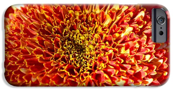Christmas Greeting iPhone Cases - Soul of Chrysanth iPhone Case by Sonali Gangane