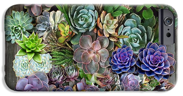 Plant Tapestries - Textiles iPhone Cases - South Africas Succulents iPhone Case by Nadine May